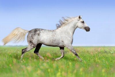 Fototapete Weißes Pferd Traben auf Sommerwiese