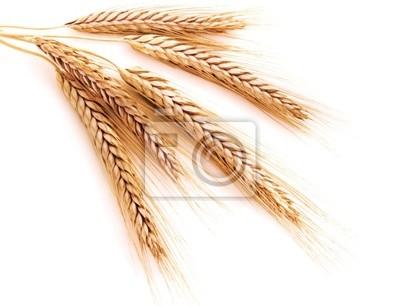 Weizenähren auf einem weißen Hintergrund