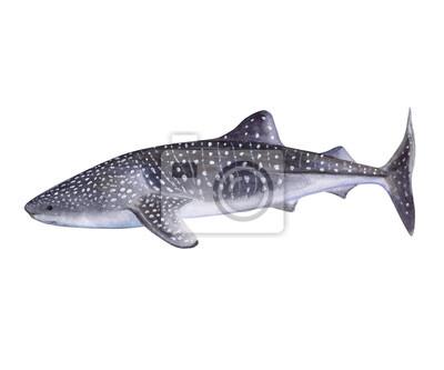 Tolle Hai Farbseite Fotos - Beispiel Anschreiben für Lebenslauf ...