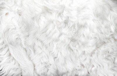 Fototapete White animal fur. Weasel or cat hair. Fur clothes, white fur coat close up.