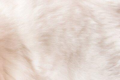 Fototapete White cat fur texture background.