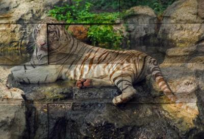 """""""White tiger"""" Mural. Der Stein Malerei Konzept"""