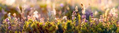 Fototapete wild flowers and grass closeup, horizontal panorama photo