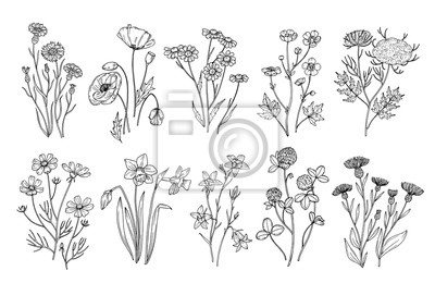 Fototapete Wild flowers. Sketch wildflowers and herbs nature botanical elements. Hand drawn summer field flowering vector set. Illustration of floral field, wild flower white black line