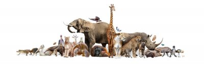 Fototapete Wild Zoo Animals on White Web Banner