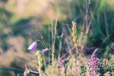 Fototapete Wilde Blumen