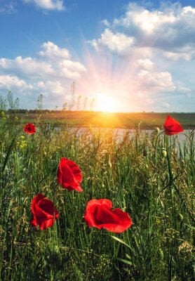 Fototapete Wilde Mohnblumen im Morgengrauen auf dem Feld mit Wolken