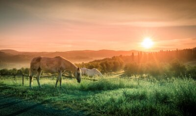 Fototapete Wilde Pferde und toskanischer Sonnenaufgang