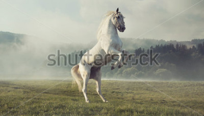 Fototapete Wildes weißes Pferd