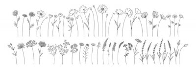 Fototapete Wildflowers set, line style hand drawn flowers. Meadow herbs, wild plants, botanical elements for design projects. Vector illustration.