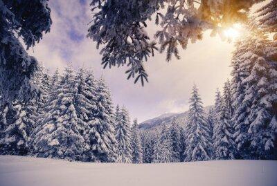 Fototapete Winter