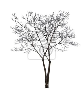 Atemberaubend Kahler Baum Umriss Färbung Seite Fotos ...