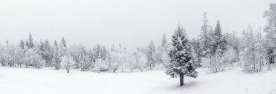 Fototapete Winter landscape. Taganay national Park, Chelyabinsk region, South Ural, Russia