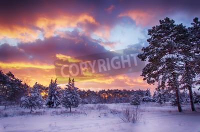 Fototapete Winter-Szene, Schnee Wald in der Morgendämmerung, mehrfarbigen Himmel bei Sonnenaufgang
