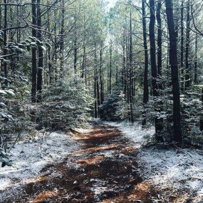 Fototapete Winter-Wälder