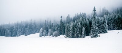 Fototapete Winter weißen Wald mit Schnee, Weihnachten Hintergrund