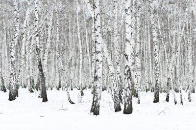 Fototapete Winterwald