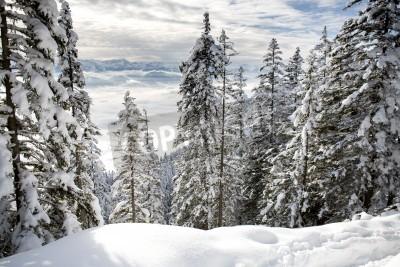 Fototapete Winterwald in den Alpen bei Kufstein in Österreich, Europa.