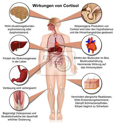 Wirkungen von cortisol auf den körper, vektor illustration ...