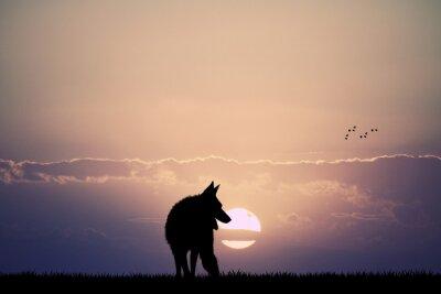 Fototapete wolf at sunset