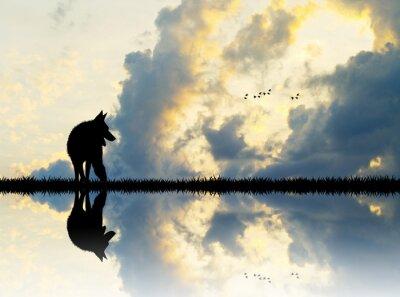 Fototapete Wolf auf dem Fluss bei Sonnenuntergang