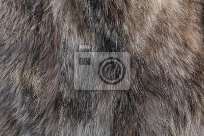 Fototapete Wolf Fell Textur