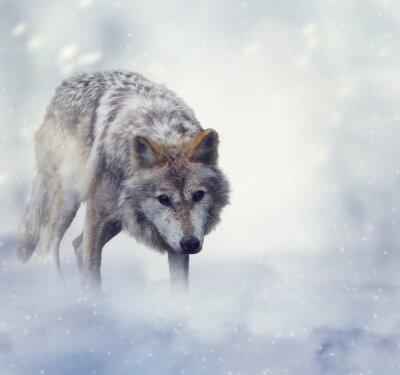 Fototapete Wolf Im Winter Zeit