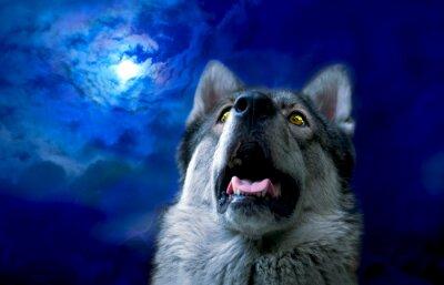 Fototapete Wolf / Wolf in der Nacht, wählen Sie Fokus auf Augen. Digitale Retusche.