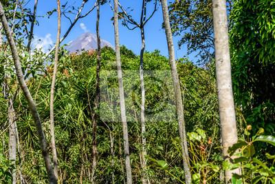Mahagonibäume  Woodland & mahagoni bäume mit rauch puffing von aktiven pacaya ...