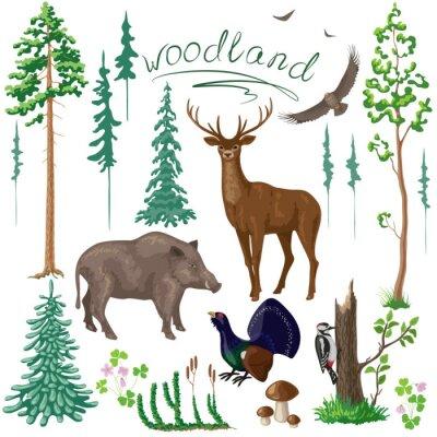 Fototapete Woodland Pflanzen und Tieren Set