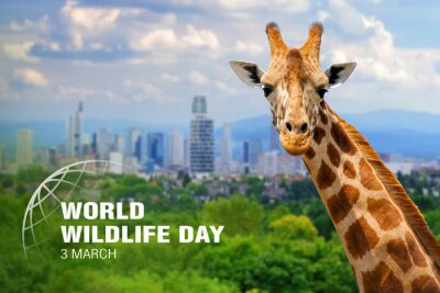 Fototapete World Wildlife Day. Text on giraffe background