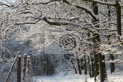 Wunderschöner verschneiter Winterweg