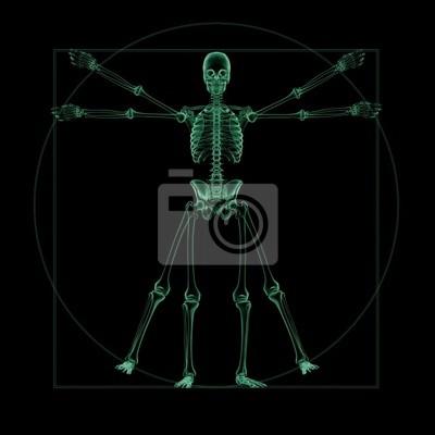 X-ray-skelett-struktur eines vitruvian man fototapete • fototapeten ...