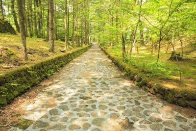 Fototapete 長野 県 軽 井 沢 町 新 緑 の 幸福 の 谷