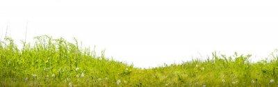 Fototapete Земля с зеленой травой на белом фоне