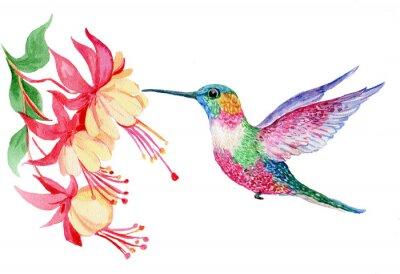 Fototapete Акварель, маленькая птичка колибри, иллюстрация