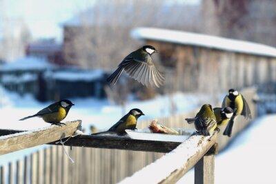 Fototapete Птица синица зима кормушка много