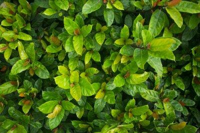 Fototapete Зелень