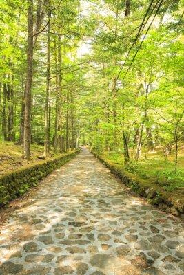 Fototapete 長野県軽井沢町 新緑の幸福の谷