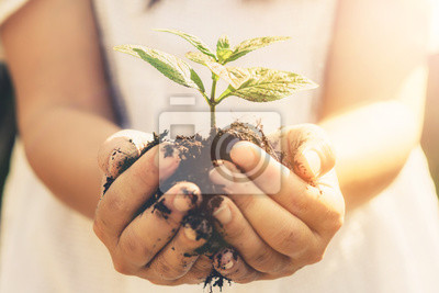 Fototapete Young plant tree sprout in woman hand. Concept of farming and environment protecting.
