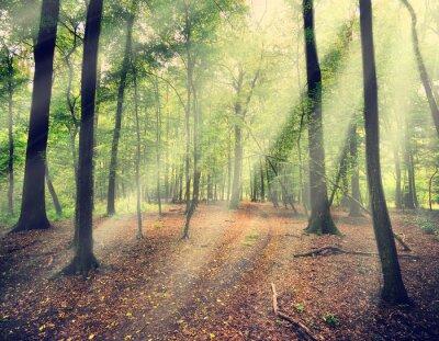 Fototapete Zauberwald im Myst mit Sonnenstrahl