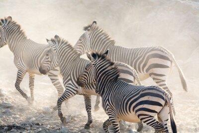 Fototapete Zebras laufen, namibia, afrika