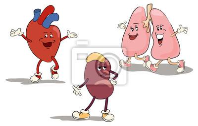 Zeichensatz inneren Organe 1