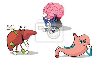 Zeichensatz inneren Organe 2