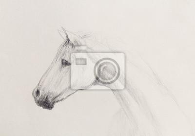 Zeichnen Sie Bleistift Pferd Auf Altem Papier Jahrgang Papier
