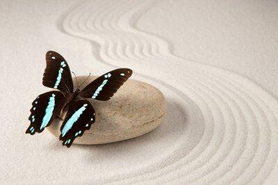 Fototapete Zen Schmetterling