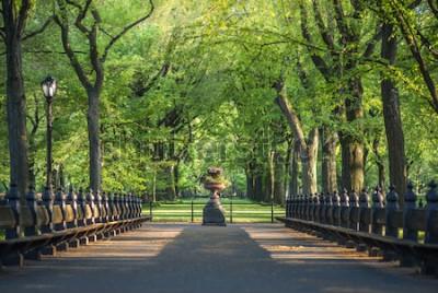 Fototapete Zentralpark. Bild des Mallbereichs im Central Park, New York City, USA