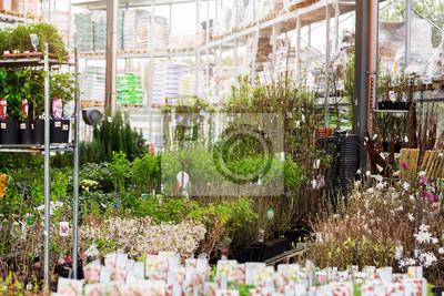 Zierpflanzen Zum Verkauf In Garten Supermarkt Fototapete