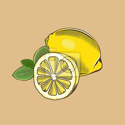 Zitrone im Weinleseart. Farbigen Vektor-Illustration