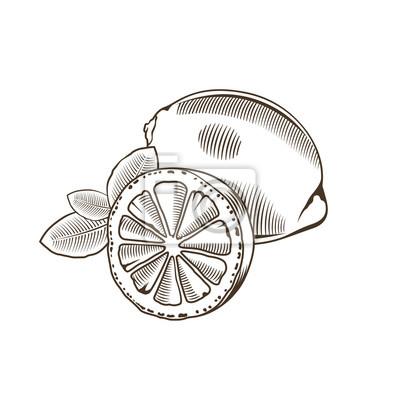 Zitrone im Weinleseart. Linie Kunst Vektor-Illustration